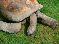 Free Tortoise, Turtle, Terrestrial Animal, Fauna Stock Photo - 116331890