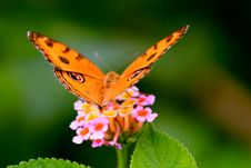 Free Photo Of Butterfly Royalty Free Stock Image - 116371076