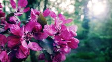 Free Selective Focus Photography Of Pink Petaled Flowers Stock Image - 116371151