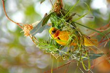 Free Yellow And Green Building Nest Stock Images - 116371204