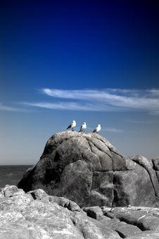 Free Three White Birds On Rock Stock Photo - 116371210