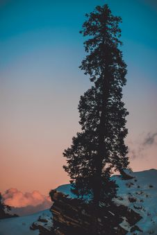 Free Pine Tree On Snow Covered Hill Under White And Blue Sky At Daytime Stock Photography - 116371252