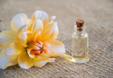 Free Close-Up Photo Of White And Yellow Flower Near Glass Bottle Royalty Free Stock Image - 116371306