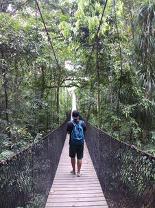 Free Man Walking On Hanging Bridge In Forest Stock Photography - 116371312