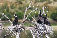 Free Close-Up Photography Of Black Birds Perched On Branch Royalty Free Stock Image - 116371496