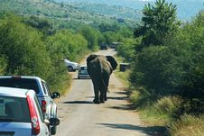 Free Photography Of Elephant On Road Royalty Free Stock Photography - 116371517