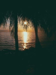Free Photo Of Two Coconut Trees On Beach At Sunset Royalty Free Stock Image - 116371606