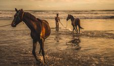 Free Two Brown Horse On Sea Stock Image - 116371611