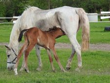 Free Horse, Mare, Foal, Pasture Royalty Free Stock Image - 116412296