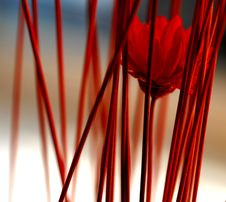 Free Red, Close Up, Line, Plant Stem Royalty Free Stock Photography - 116412597