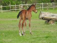 Free Horse, Foal, Pasture, Horse Like Mammal Stock Photo - 116412650