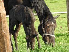 Free Horse, Pasture, Fauna, Horse Like Mammal Royalty Free Stock Photos - 116412848