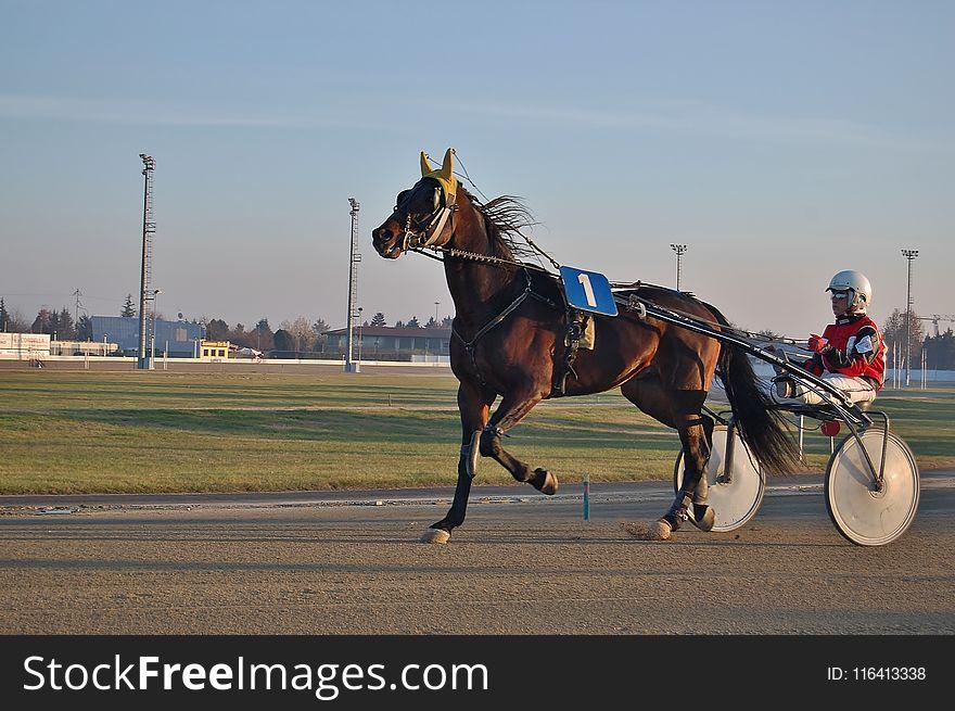 Jockey, Horse Harness, Horse, Horse Racing