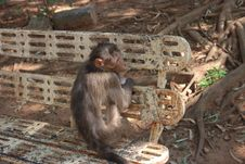 Free Monkey Trap On Outdoor Bench Royalty Free Stock Photos - 116433898