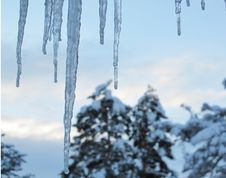 Free Winter Icicles Before Daybreak With Snow Covered Pine Trees In Background Stock Photos - 116437273