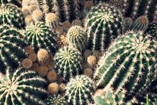 Free Green Cactus Lot Royalty Free Stock Image - 116504386