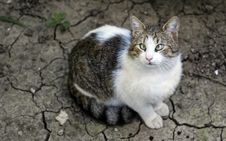 Free White And Brown Tabby Cat Stock Photo - 116504490