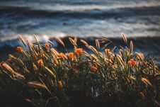 Free Photo Of Golden Flowers Beside Body Of Water Stock Photos - 116504573
