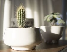 Free White Potted Cactus Plant In Closeup Photo Royalty Free Stock Photos - 116504578