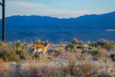 Free Brown Deer On Green Grass Field Stock Photos - 116504643