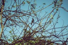Free Crow On Tree Branch Stock Image - 116504671