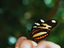 Free Macro Photography Of Beige, Orange, White, And Black Butterfly On Human Hand Royalty Free Stock Photo - 116504695