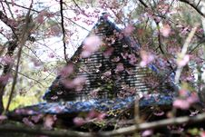 Free Pink Sakura Flowers Beside House Stock Photo - 116504740