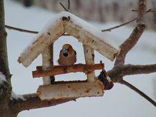 Free Branch, Bird Feeder, Twig, Wood Royalty Free Stock Image - 116611086