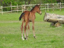 Free Horse, Foal, Pasture, Horse Like Mammal Stock Photo - 116611250