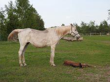 Free Horse, Pasture, Mare, Horse Like Mammal Stock Image - 116611251