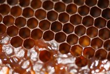 Free Honeycomb, Membrane Winged Insect, Honey Bee, Bee Stock Image - 116611301