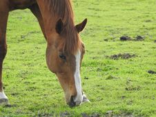 Free Horse, Grassland, Pasture, Grazing Stock Image - 116611421