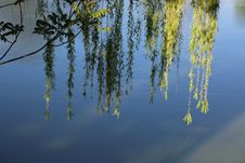 Free Reflection, Water, Nature, Tree Royalty Free Stock Photography - 116611577