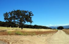 Free Road, Sky, Ecosystem, Field Stock Photography - 116611702