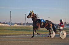 Free Horse Harness, Jockey, Horse, Horse Racing Stock Photo - 116611860