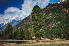 Free Photography Of Fir Trees On Mountains Royalty Free Stock Photo - 116695415