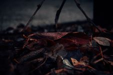 Free Close-Up Photography Of Fallen Leaves Royalty Free Stock Photo - 116695505
