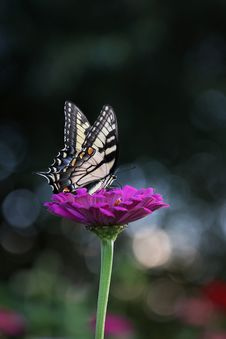 Free Close-up Photography Of Butterfly Stock Photos - 116695523