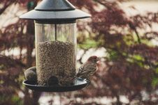 Free Selective Focus Photography Of House Finch Perched On Bird Feeder Stock Photos - 116695583