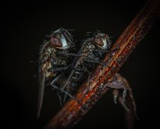 Free Macro Photography Of Flies Royalty Free Stock Images - 116695599