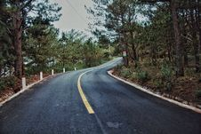 Free Photography Of Roadway Surrounded By Trees Royalty Free Stock Photo - 116695695