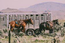 Free Two Black And Brown Horses Stock Photography - 116695772