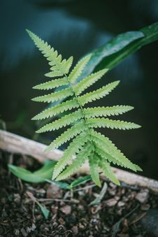 Free Close-Up Photography Of Fern Plant Stock Photography - 116695852