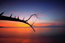 Free Bare Tree Branch Near Body Of Water During Sunset Royalty Free Stock Images - 116695909