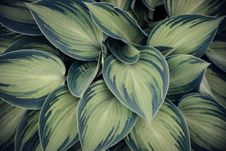 Free Closeup Photo Of Green Variegated Leaf Plants Stock Photos - 116695963