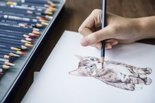 Free Person Sketching A Kitten Stock Image - 116696101