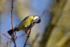 Free Bird, Beak, Fauna, Finch Stock Image - 116733251
