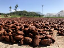 Free Rock, Soil, Sky, Cocoa Bean Stock Image - 116733331