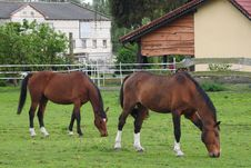 Free Horse, Mare, Horse Like Mammal, Pasture Stock Images - 116733354