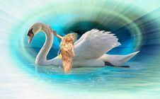 Free Swan, Water Bird, Ducks Geese And Swans, Beak Royalty Free Stock Photos - 116733368